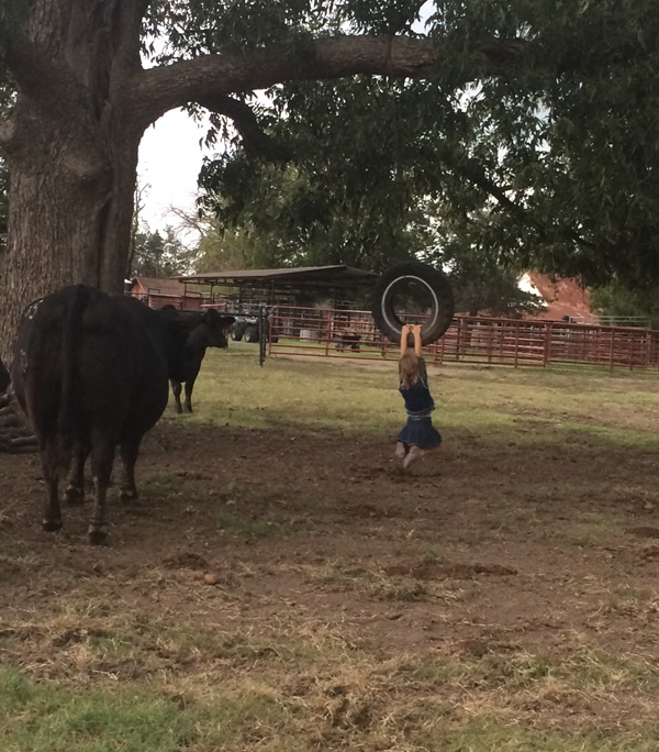 Registered Angus Cattle in Texas