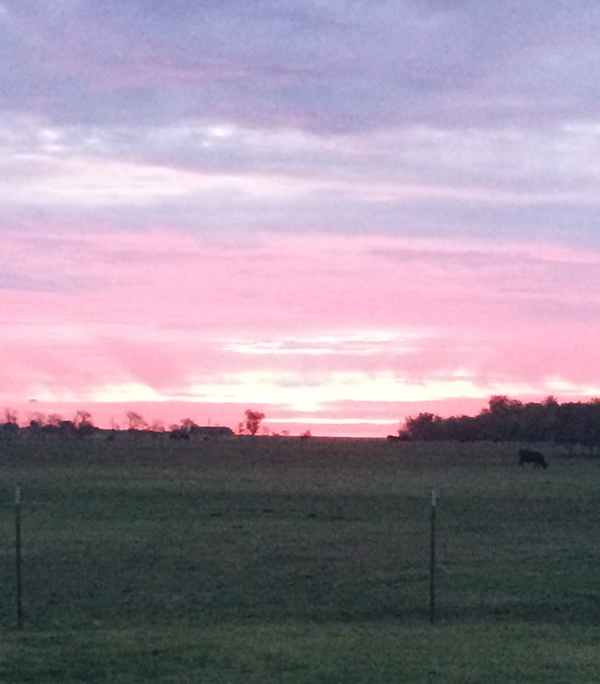 Sunset at Silvey Angus Ranch