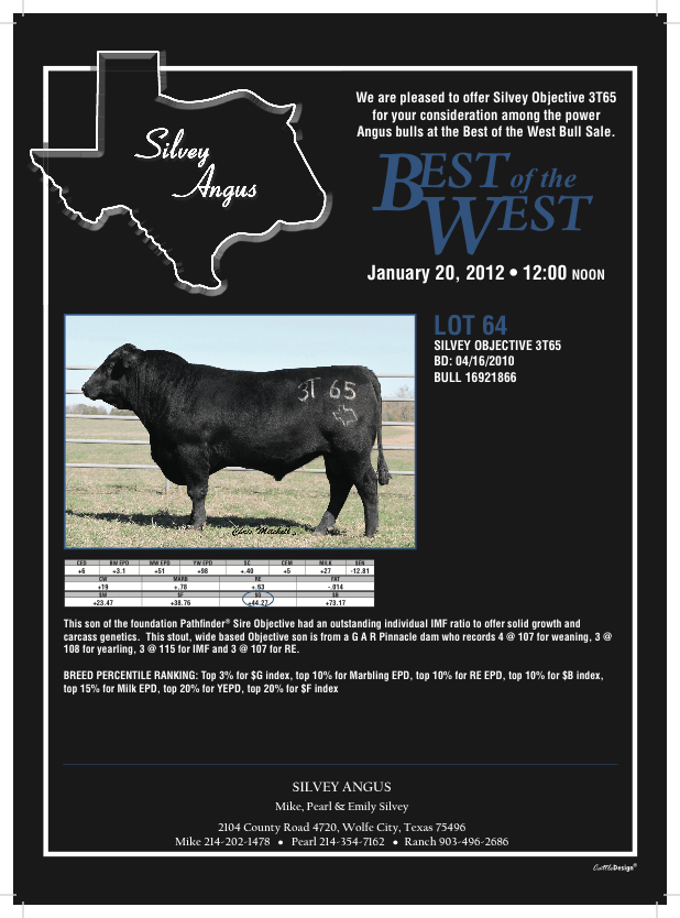 1201 silvey 3t65 Registered Angus Bull